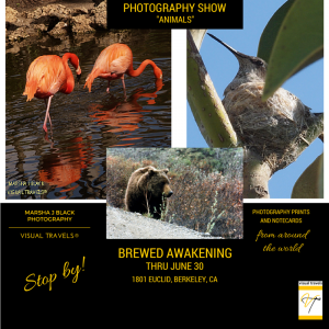 "Flyer for Marsha Black's Photography Exhibit, ""Animals,"" at Brewed Awakening, 1801 Euclid in Berkeley, CA"