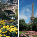 Eiffel Tower Paris Then (2006-yellow flowers) and Now (2018-pink flowers up the side) | Photos: Marsha Black | Photography Tips for the Accidental Photographer: Define Your Subject. Then Enhance It. | Marsha Black - Visual Travels®